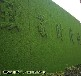 龙岩市工程围挡绿草皮一卷联系方式