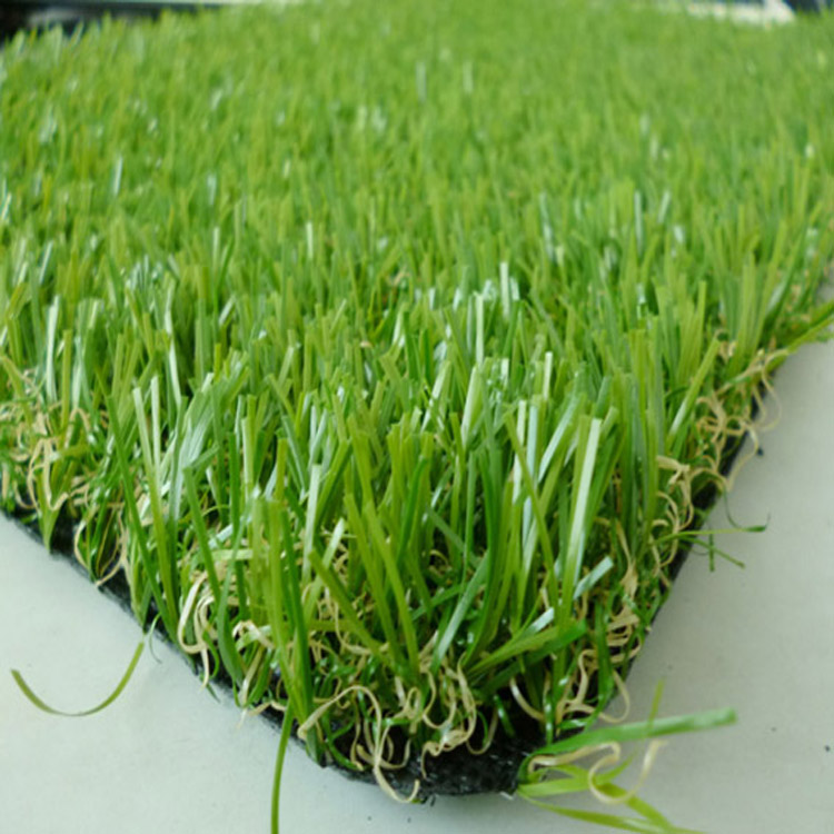 门球场专用草坪现货