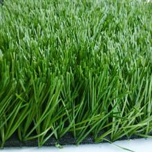 幼稚园塑胶地坪人造草坪哪里有专卖图片