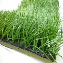 新型围挡人造草坪代理商图片