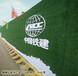 福建买绿色草坪围挡每平米价格青岛博翔远BF2012
