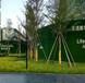 福建假草坪围挡每平方多少钱厂家青岛博翔远BF2012