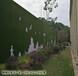 江西塑料草坪围挡价格每平米多少青岛博翔远BF2012