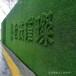 墙面专用人造草坪