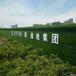 金昌工地人造草皮圍擋廠家每平米報價