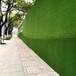 桐城围挡塑料草坪多钱