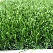 塑料的小草坪图片