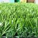 人造草皮圍欄