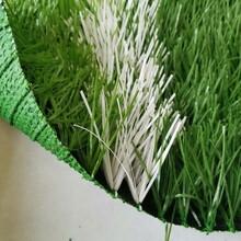 pvc塑料草坪图片