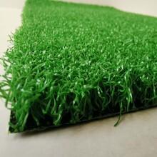 pp塑料草坪图片