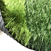 外墙人工草坪图片