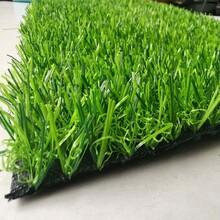 绿地草坪塑料图片