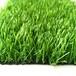 十公分寬塑料板隔草坪
