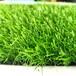 球场塑料草坪