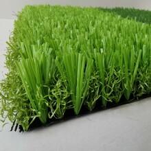人工草草坪图片