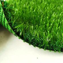 抗老化的塑料草坪图片