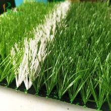 人造草皮体育图片