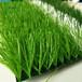 龙岩人造草坪生产厂家
