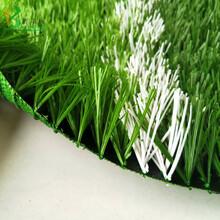 人工草坪白色线图片