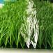 墻上裝飾人造草坪