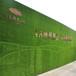 工地围墙怎么加草皮