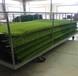 長沙縣人造草坪生產廠家