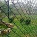 絞索網安平縣中耀路橋邊坡防護工程