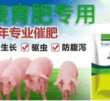 豬吃什么長得快,怎么養豬長得快,豬催肥飼料添加劑,育肥豬專用諸安康圖片