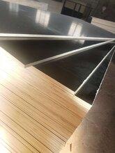 环保高层建筑模板胶合力强德州星冠木业