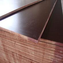 泰安工程用三六尺建筑木模板工程專用德州星冠圖片