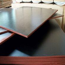 东营工程专用四八尺建筑模板方便灵活德州星冠