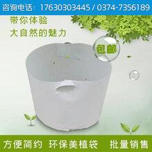 博一化纖植樹袋廠家批發美植袋美樹袋花盆容器種植袋移植袋定制
