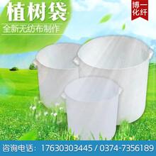安阳优质营养袋大量批发图片
