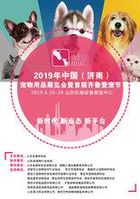 2019年中國(濟南)寵物醫療展覽會暨齊魯愛寵文化節圖片