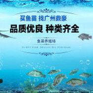 广州市花都区花山鼎豪鱼苗养殖场