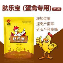 蛋鸭吃什么下蛋多提高蛋鸭产蛋率用什么白金肽效果怎么样