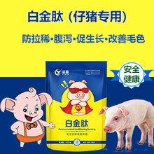 猪催肥用什么猪吃什么长得快猪催肥饲料添加剂