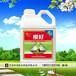 吉林長春,旺潤微生物菌劑-根好,果蔬生根養根鉀寶沖施肥