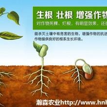 桶肥生根膨果桶肥价格介绍图片