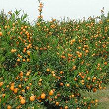 果树专用植物精华液果树专用水溶肥厂家图片
