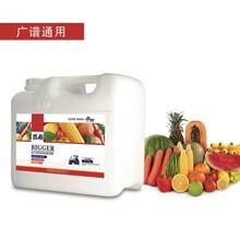 瓜果专用植物免疫蛋白肥价格图片
