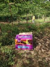 水溶肥厂家高端水溶肥厂家果树专用水溶肥图片