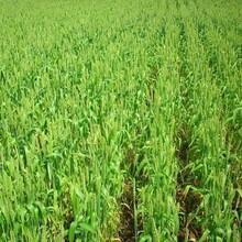 芸乐收植物生长调节剂芸乐收厂家图片