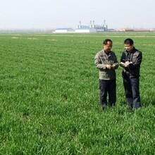 小麦增产套餐小麦高产套餐厂家_芸乐收套餐图片