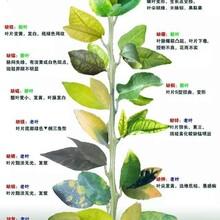 果树用冲施肥果树促花保果冲施肥图片