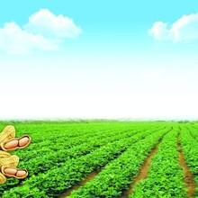 氮肥缓释液体氮肥水稻玉米追肥液替代尿素追肥速效氮快速补氮加快生长图片