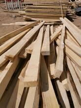 北京市朝陽區建筑木方批發租賃銷售回收圖片