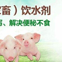 小猪拉稀用什么药最快预防仔猪拉稀催肥增重母猪便秘图片