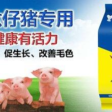 """育肥猪""""白金肽""""催肥白金肽,少生病,提前出栏图片"""