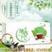 蒲公英茶的作用及用量山东康美药业保健茶代加工厂家
